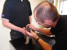Dyrlægebesøg og undersøgelse hos Højbjerg Dyreklinik - næsten 8 gamle