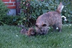 Messi og Wilma tumler i haven - Messi er godt 7 uger gammel