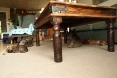 Alle hundene slapper af i stuen - 7½ uge gammel eller deromkring