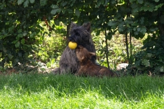 Dittie og Max leger med bold - 7½ uge gammel