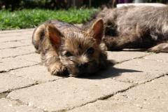 Messi på terrassen - 8 uger gammel