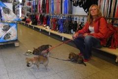 Hvalpene på ekskursion i Pet World - næsten 8 uger gamle