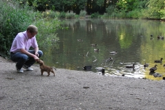 Rocky har ikke fundet ud af at ænder smager godt, i hundeskoven ved Atletion - næsten 10 uger gammel