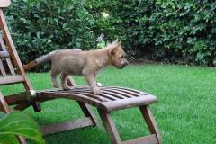Rocky kigger efter lidt sol fra udsigtspunktet på dæksstolen - 10 uger gammel